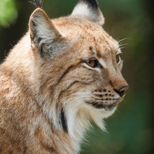 calendario editorial para marzo 2020 día mundial de la vida silvestre